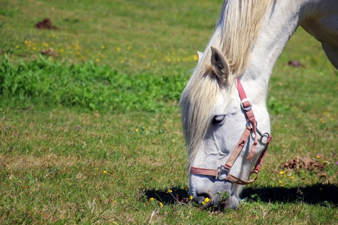horse-1753383_1920